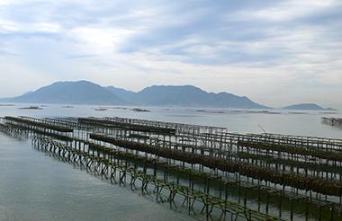 広島湾をはじめ瀬戸内海の島々を望む、ニノシマの遠浅の磯づたいには(沖に仕掛ける牡蠣養殖イカダ・筏と異なる)「ヒビ・篊」と呼ばれる牡蠣養殖ダナ・柵が目を惹く。「ヒシ・干州」から「ヒビ・篊」の豊穣へ。竹冠に洪(溢れ満ちるさま)と書くヒビは、カキの胞子・胚子を付着させ稚貝を成長させるための海中の竹組み・サクを示す。